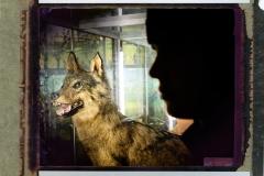 El-lobo-que-llevo-dentro